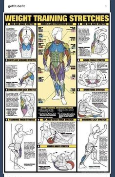 Weight training stretches - A healthy mind leads to a healthy body