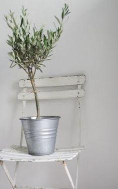 oliivipuu <3
