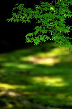 "lifeisverybeautiful: "" Kyoto, Japan (via GANREF 