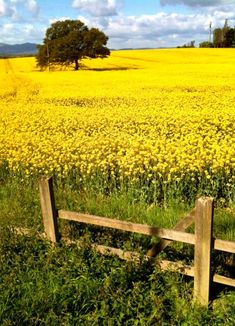 Oil fields, or as a Romanian once described them to me as 'yellow fields of happiness'