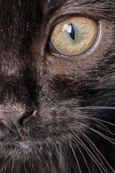 Joy My black kitten