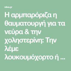 Η αρμπαρόριζα η θαυματουργή για τα νεύρα & την χοληστερίνη: Την λέμε λουκουμόχορτο ή μοσχομολόχα -idiva.gr
