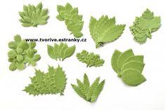 Listy z látky 50 ks Plant Leaves, Herbs, Plants, Herb, Plant, Planets, Medicinal Plants