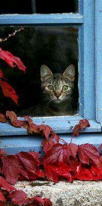 Cat in a blue window