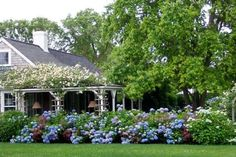 Hydrangea hedge and climbing roses (probably New Dawn) on Nantucket. Garden Cottage, Home And Garden, Pine Garden, Outdoor Spaces, Outdoor Living, Hydrangea Garden, Hydrangeas, Hydrangea Landscaping, Blue Hydrangea