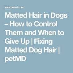 Matted Hair in Dogs – How to Control Them and When to Give Up | Fixing Matted Dog Hair | petMD