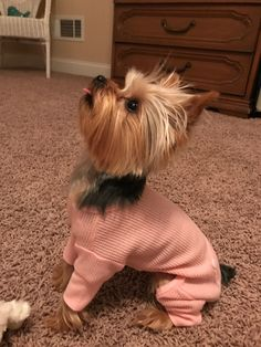 Yorkie…small in size…big in personality