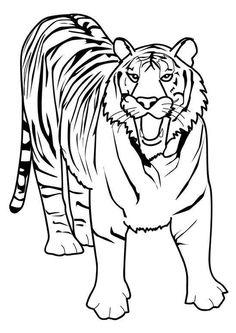 Dessin d'un tigre, à colorier
