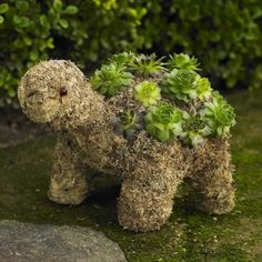 Stunning 73 Succulent Turtle Topiary Ideas For Your Garden