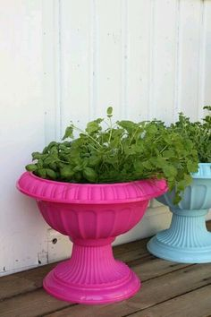 What a wonderful way to add color to a great plant that may not bloom all that long.