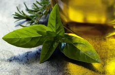 Oregano oil is not something we use on a daily basis. But, this list of 25 amazing oregano oil benefits will convince you to use it as often as possible! Home Remedies For Bronchitis, Home Remedies For Warts, Herbal Remedies, Natural Remedies, Oregano Oil Benefits, Oregano Essential Oil, Essential Oils, Herbs For Anxiety, Toenail Fungus Cure