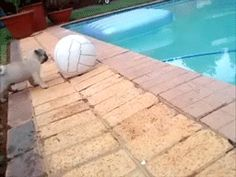 Pug Puppy at Pool - Funny Bob Cute Funny Animals, Funny Dogs, Cute Dogs, Cute Gif, Funny Cute, Hilarious, Stupid Funny, Pug Gifs, Game Mode