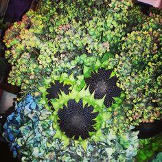 Black diamons sunflowers and dog eyed euphorbia