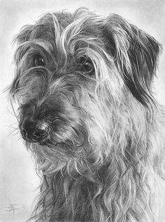 Great Expectations by Sami Thorpe.What great pencil drawings! Realistic Pencil Drawings, Graphite Drawings, Amazing Drawings, Pencil Drawings Of Animals, Pencil Drawing Tutorials, Art Drawings, Drawing Ideas, Les Bases Du Dessin, Dog Portraits