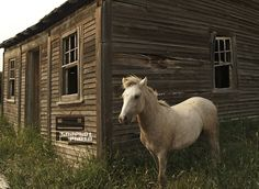 Wild Horse photo print by SnapbotPhotography on etsy $40