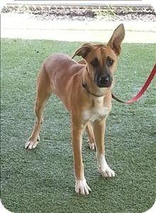 Birmingham, AL - Shepherd (Unknown Type) Mix. Meet Buddy a Dog for Adoption.