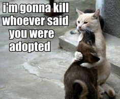 Nobody will say again that you are adopted..