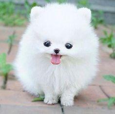 i love really cute dogs