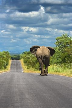 Elephant.  Kruger National Park, South Africa by jana.wojcik