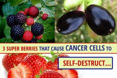 3 Super Berries That Cause Cancer Cells to Self-Destruct…