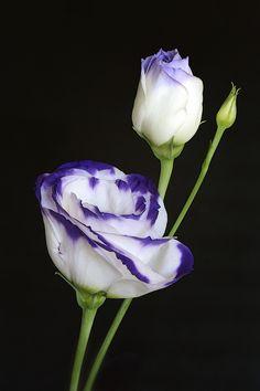 ~~ just a flower ~~