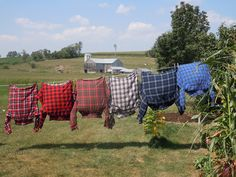 .this looks like our old neighbors clothes line don't you agree Robin LOL
