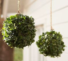 Live Ivy Kissing Ball #potterybarn