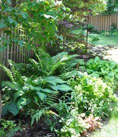 Three Dogs in a Garden: A Shade Garden in Oakville, Ontario Shade Landscaping, Outdoor Landscaping, Ferns Garden, Shade Garden, Japanese Painted Fern, Hydrangea Quercifolia, Lawn Sprinklers, Heuchera, Foliage Plants