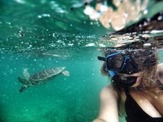 #goodmorning #messico #tartaruga #tortuga #turtle #mare #sea #akumal #sun #enjoy #lastday #gopro #goprooftheday #goprounited #snapsed #meraviglia #holiday #loveit #top #selfie