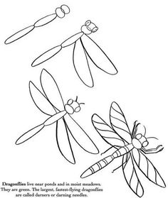 Template Of Work Name Drawings Done In Pencil Plus Not – Handstickerei Drawing Lessons, Drawing Techniques, Art Lessons, Bugs Drawing, Drawing For Kids, Name Drawings, Animal Drawings, Tattoo Painting, Sketch Note