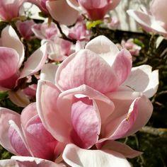 flower in gardens of spaisland Piestany in Slovakia