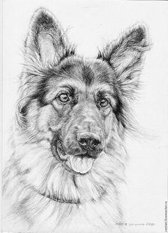 Cute German Shepherd dog drawing.