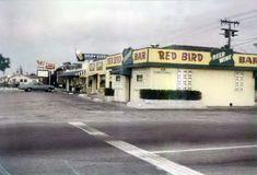 South Miami, Bird, Birds
