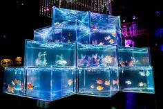 「アートアクアリウム2015」日本橋で開催 - 約5000匹の金魚が泳ぐ水中アートの写真17 Vaporwave, Aesthetic Revolution, Aquascaping, Nightclub Design, Tokyo Museum, City Folk, Light Of Life, Beautiful Fish, Space Architecture