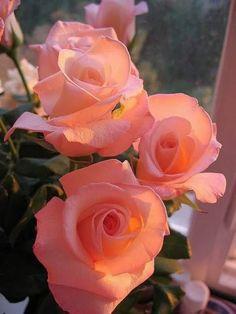 Maria Love (felicidade Amor sonhos) - Google+