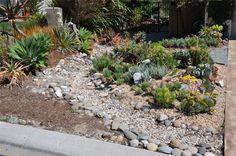 Succulent Garden and Dry Creek Bed