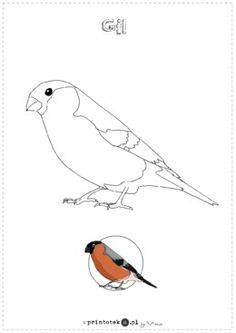 Art Drawings For Kids, Bird Drawings, Colouring Pages, Coloring Books, Bird Breeds, Pictogram, Applique Quilts, Painting & Drawing, Art Projects