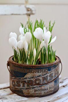 Creative Spring Garden Pots and Planters Easter Flower Arrangements, Easter Flowers, Spring Flowers, White Flowers, Floral Arrangements, Beautiful Flowers, Spring Blooms, French Flowers, White Tulips