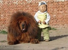 omg perro leon