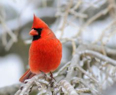 I am obsessed with birds this year. Look at the spectacular color!