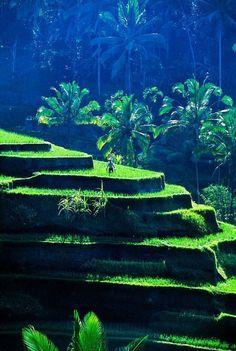 Rice Terraces near Sebatu, Bali So Beautiful! @Darley Travel - Elegant Destination Weddings and Honeymoons