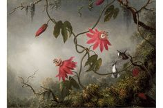 """Martin Johnson Heade (American, 1819–1904), """"Passion Flowers and Hummingbirds,"""" about 1870–83. Oil on canvas, 15 1/2 x 21 5/8 inches. Museum of Fine Arts, Boston; Gift of Maxim Karolik for the M. and M. Karolik Collection of American Paintings, 1815–1865, 47.1138."""