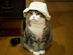 Maru:[I don't like this, too. But I wear everything well.]