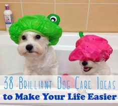 38 Unexpectedly Brilliant Tips For Dog Owners