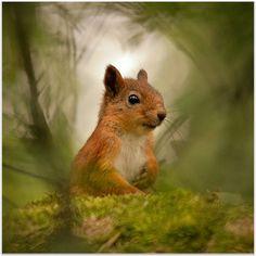 Expressive Animal Portrait Photography: Squirrels