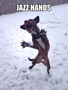 funny dog pictures with captions jazz hands