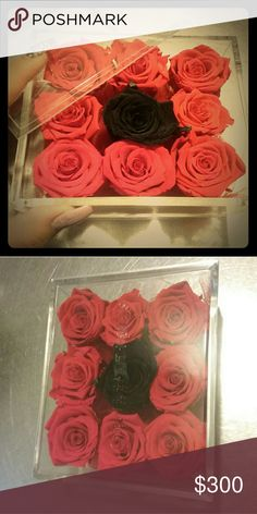 Roses box 9 Japanese roses 100% real still in life 3 years Amour Diseno Floral Jewelry