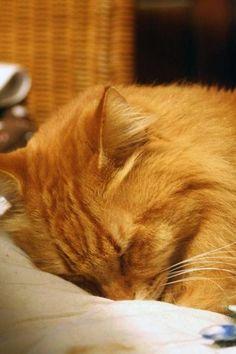 sleeping cat~