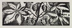 Hops, 1930s, Eric Ravilious, wood engraving, England
