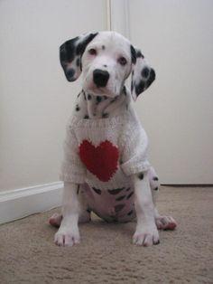 How cute, looks a bit like   Dakota.